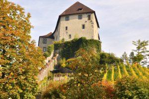 Feldkirch - Schattenburg mit Weinberg