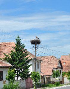 Storchennest am Strassenrand in Siebenbürgen, Rumänien