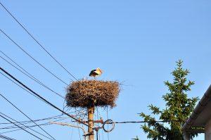 Storchennest mit Storch