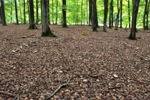 Pilzkreis im Marscherwald, Luxemburg