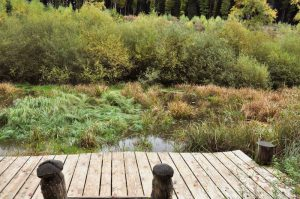 Ripsmoor am Müllerthal Trail, Luxemburg